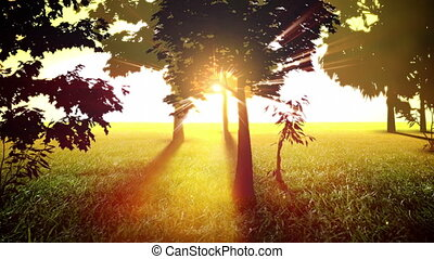солнечно, trees, петля