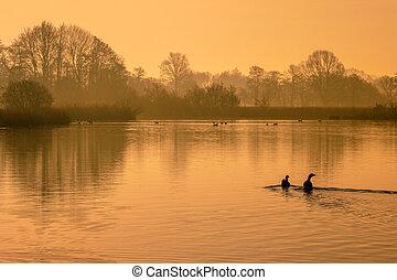 солнце, озеро, утро, отражающий, оранжевый, birds