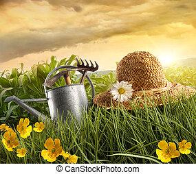 солома, кукуруза, laying, воды, поле, можно, шапка