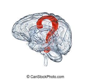 стакан, в, вопрос, отметка, головной мозг, человек