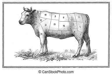 старый, говядина, диаграмма