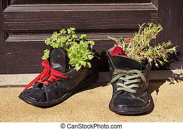 старый, кожа, flowerpots.plants, обувь, tattered, выращивание, башмак