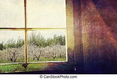 старый, яблоко, фруктовый сад, ищу, окно, вне