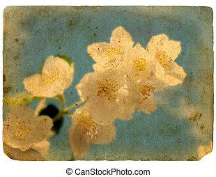 старый, postcard., blooming, jasmine., цветок