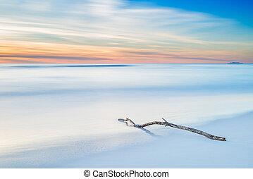 сумерки, дерево, закат солнца, филиал, белый, пляж