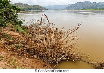 сухой, воды, меконг, дерево, берег, река, laos, roots