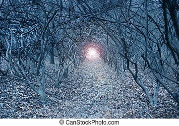сюрреалистичный, muted, arch-like, trees, призрачный, леса