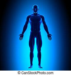 тело, синий, полный, conce, -, фронт, посмотреть