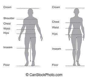 тело, measurements, диаграмма, диаграмма, женский пол, измерение, мужской, одежда, размер