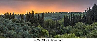 тоскана, кипарис, пейзаж