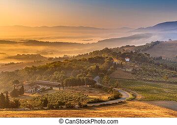тосканский, сельская местность, над, туман, утро