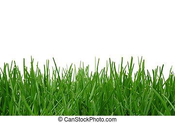 трава, задний план