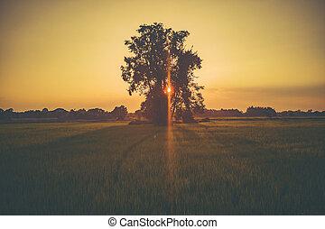 трава, закат солнца, цветок, поле, посмотреть