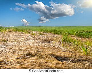 трава, зеленый, луг