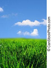 трава, зеленый, пейзаж
