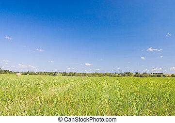 трава, лето, пейзаж, зеленый, поле, красивая