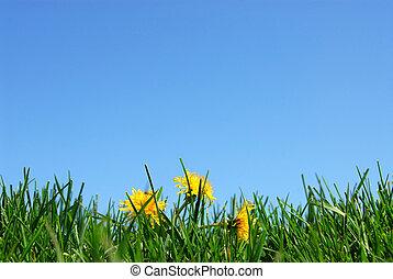 трава, небо, задний план