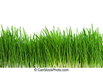 трава, пшеница