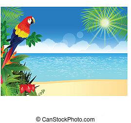 тропический, ара, пляж, backgroun