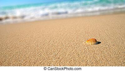 тропический, оболочка, пляж, море