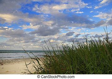 тропический, пляж, растительность