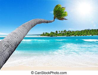 тропический, рай