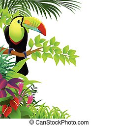 тропический, тукан, лес, птица