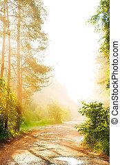 туман, лес, дорога