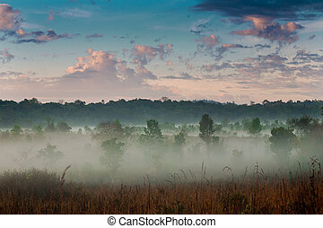 туман, утро, sky.