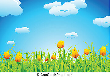 тюльпан, сад