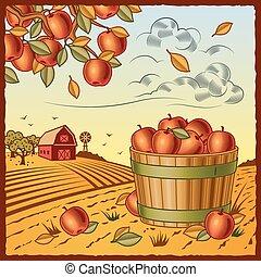 уборка урожая, яблоко, пейзаж