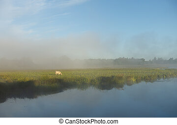 утро, grazing, река, туманный, корова