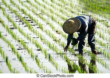 ферма, за работой, фермер