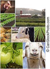ферма, коллаж, животное