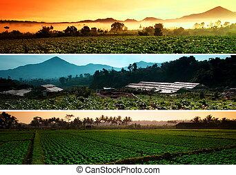 ферма, коллаж, beatiful, пейзаж