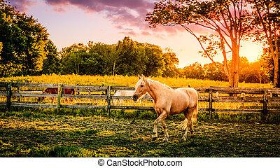ферма, лошадь