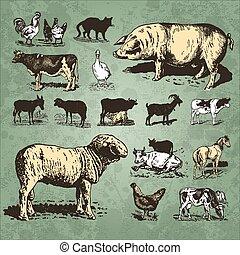 ферма, марочный, задавать, animals, (vector)