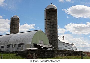 ферма, молочные продукты