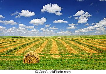 ферма, поле, пшеница, уборка урожая