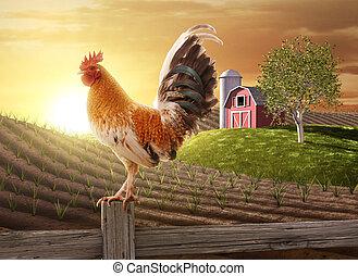 ферма, свежий, утро