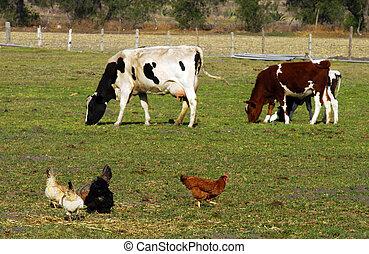 ферма, animals