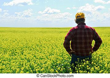 фермер, урожай, канолы
