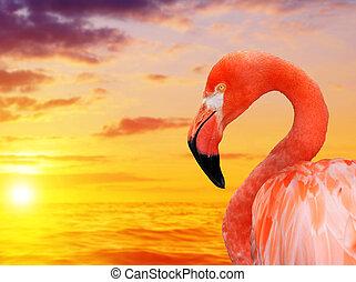 фламинго, sunset.