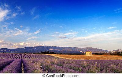 франция, прованс, пейзаж