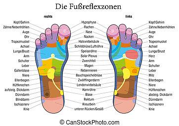 фут, рефлексология, диаграмма, немецкий, descr