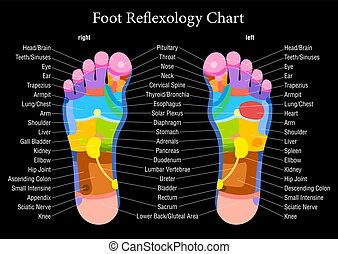 фут, рефлексология, черный, диаграмма, descri