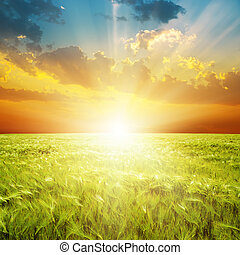 хорошо, над, поле, зеленый, оранжевый, закат солнца, сельское хозяйство