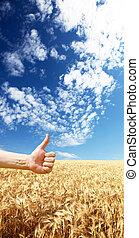 хорошо, пшеница, farmer's, это, желтый, рука, символизировать, уборка урожая, year's
