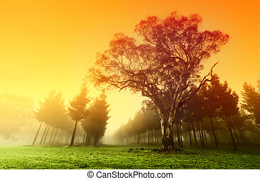 хрустящий, лес, восход