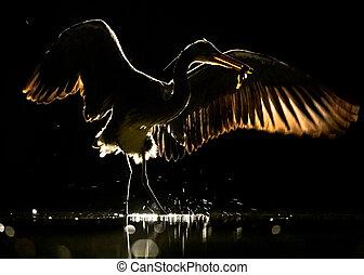 цапля, ночь, wings, серый, распространение, силуэт